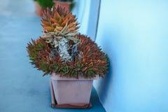 Stort keramiskt med grekisk öplats för växt på Fotografering för Bildbyråer