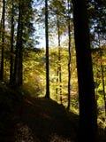 Stort kontrastera ljus i höstskogen arkivfoto
