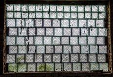 Stort ladugårdfönster Royaltyfri Bild
