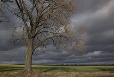 Stort landskap med det ensamma trädet på fältet Royaltyfri Bild