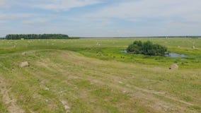 Stort lantbrukfält med hö stock video