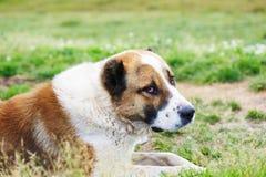 stort ligga för hund Arkivfoto
