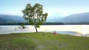 Stort lockigt ensamt träd mot bergigt landskap stock video