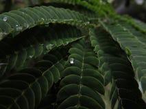 Stort makroskott av en droppe av regn på ett blad arkivfoto