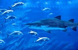 Stort naturligt akvarium Arkivbilder