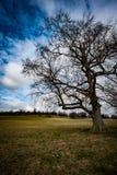 Stort parklandträd Arkivfoto