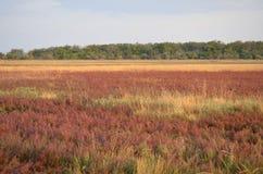 Stort purpurfärgat fält av lösa blommor Bakgrund royaltyfri bild