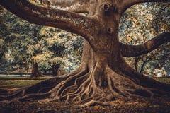 stort rota treen Royaltyfri Fotografi