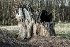 stort rota treen royaltyfri foto
