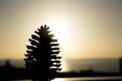 Stort sörja kotten framme av solnedgången arkivfoto