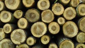 Stort sörja trä loggar in stor vedtrave arkivbild