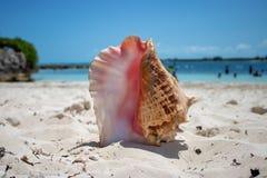 Stort skal på en tropisk strand arkivfoto