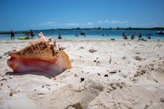 Stort skal på en tropisk strand fotografering för bildbyråer