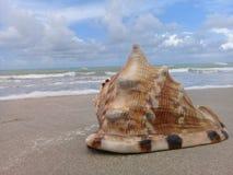 Stort snäckskal på sanden vid havet royaltyfri bild
