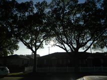Stort träd 6 Arkivfoto