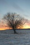 Stort träd Royaltyfri Fotografi