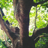 Stort träd Arkivfoton