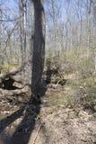 Stort träd bredvid en ström Arkivfoto