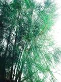 Stort träd för son arkivfoto