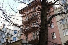 Stort träd framme av byggnaderna Royaltyfri Foto