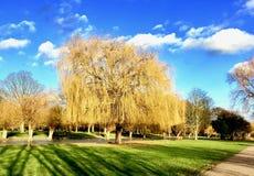 Stort träd i Bedford Arkivbild