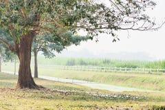 Stort träd i djup rad arkivbilder