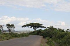 Stort träd i Etiopien Royaltyfri Bild