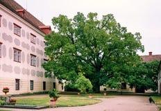 Stort träd i gammal slott royaltyfria bilder