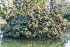 Stort träd i mitt av en liten sjö Arkivbilder