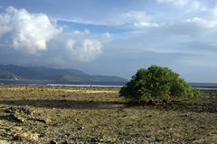 Stort träd i mitt av en strand royaltyfri foto