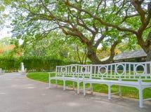 Stort träd i trädgård Arkivfoton