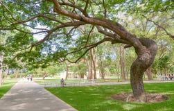 Stort träd i trädgård Arkivbilder