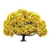 Stort träd med gul lövverk Arkivfoto