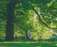Stort träd med gummihjulgunga Royaltyfria Foton