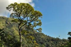 Stort träd och blå himmel fotografering för bildbyråer
