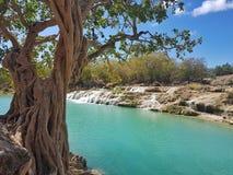 Stort träd och blåa vändkretsvattenfall royaltyfri fotografi