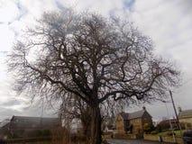 Stort träd och dunkla moln, norr Northumberland, UK Royaltyfri Fotografi