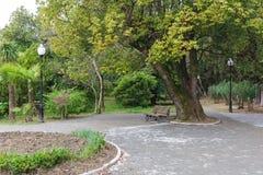 Stort träd och en bänk i parkera Royaltyfria Foton