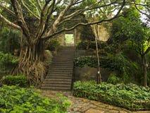 Stort träd och forntida vägg Royaltyfri Bild