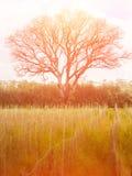 Stort träd och gult fält med filtereffekt jpg Royaltyfri Fotografi
