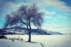 Stort träd och litet bänkvinterlandskap Royaltyfri Fotografi