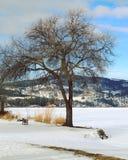 Stort träd och litet bänkvinterlandskap Arkivbild