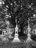 Stort träd ovanför den gamla thailändska graven, Hadyai, Songkhla, Thailand Royaltyfri Foto
