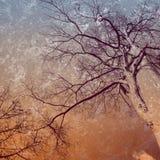 Stort träd på abstrakt tappningbakgrund Arkivfoto