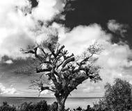 Stort träd på en strand arkivbild