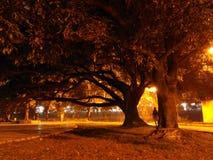 Stort träd på på natten Royaltyfri Foto