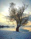 Stort träd på sjökust med solnedgånghimmel som reflekterar på lugna vatten royaltyfri fotografi
