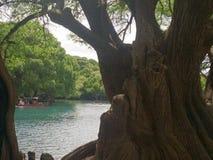 stort träd på sjön royaltyfria bilder