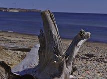 Stort träd på strand 3519 arkivbild