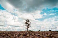 Stort träd som är dramatiskt på jordfält Royaltyfri Bild